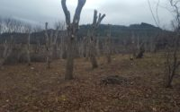 более 200 деревьев